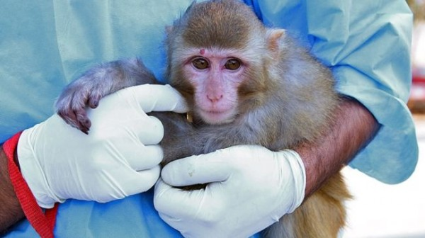 329067_Monkey astronaut